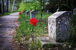 The monument to the fallen of the second world war with the assigned colors. Flower carnation at the monument of the fallen hero during world war II. Walk of Royalty Free Stock Photos
