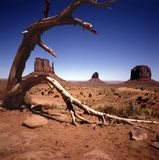 MONUMENT VALLEY 3. View of Mitens with a dry out tree in foreground Royalty Free Stock Photos