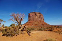 Monument Valley, Arizona. Dry tree and rocks in Monument Valley, Arizona Stock Photos