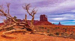 Monument valley AZ with a fallen dried tree and cloudy sky. The wonders of this historical site. Driving through Monument Valley one has to wonder who through royalty free stock photography