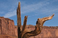 Monument Valley Bare Tree Branches Stock Image