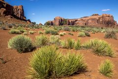Monument Valley Buttes and Folige stock photography