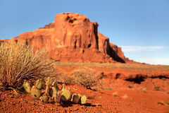 Monument Valley Cactus Royalty Free Stock Photography