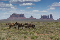Monument valley horses Stock Photos