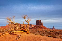 Monument Valley Landscape View With Dry Tree And Dramatic Sky, Arizona Stock Photos