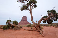Monument Valley Park Royalty Free Stock Photos