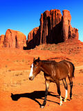 Monument Valley Park, Landscape Arizona, Utah. View of the red rock formations and horse. Desert landscape in Monument Valley, Arizona and Utah, USA Royalty Free Stock Images