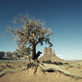 Monument Valley and tree with special photographic processing Stock Images