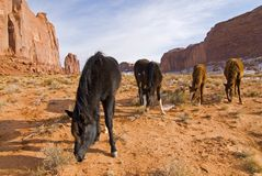Monument Valley wilderness. Horses grazing in Monument Valley, Navajo tribal park,Utah Royalty Free Stock Photography