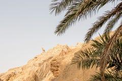 Monument von Schaf- und Palmen im Bergatlas, Tunesien, Afrika stockbilder