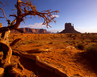 Monument West Mitten Butte in morning Utah Stock Photography