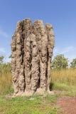 Monumentalny termitu kopiec w Kakadu parku narodowym, Północny Australia na pięknym słonecznym dniu, fotografia stock