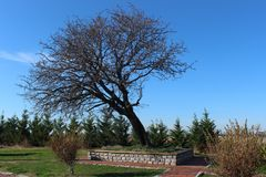 Monumentbaum lizenzfreies stockfoto