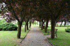 Monumenten, parken, meren, parel Lubusz Lagow Stock Foto's