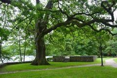 Monumenten, parken, meren, parel Lubusz Lagow Royalty-vrije Stock Foto