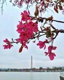 Monumento de Jefferson del lavabo de marea del monumento de Washington Fotos de archivo libres de regalías
