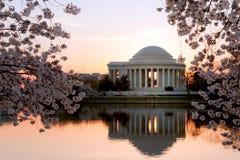 Monumento de Jefferson en la salida del sol con los flores de cereza Imagen de archivo