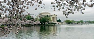 Monumento de Jefferson enmarcado por los flores de cereza Imagen de archivo
