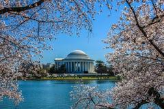 Monumento de Jefferson enmarcado por los flores de cereza Foto de archivo libre de regalías