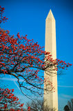 Monumento de Washington através de uma árvore Fotografia de Stock Royalty Free