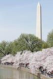 Monumento de Washington, C.C.: Flores de cereza Foto de archivo libre de regalías