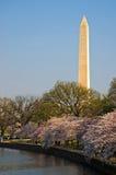 Monumento de Washington com as flores de cereja na bacia maré fotografia de stock