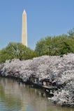 Monumento de Washington enmarcado por los flores de cereza Fotos de archivo