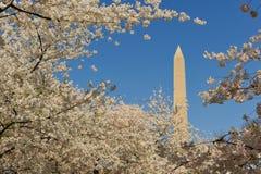 Monumento de Washington, Washington, C.C. Imagenes de archivo