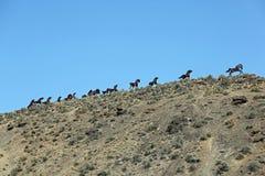 Monumento dei cavalli selvaggi Immagine Stock