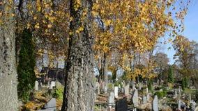 Monumento della tomba del cimitero del vento di movimento del ramo di albero della betulla di autunno vecchio video d archivio