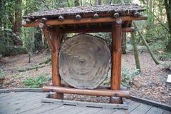 Monumento di Muir Woods National Immagine Stock Libera da Diritti