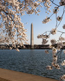 Monumento di Washiington in primavera Fotografie Stock