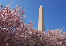 Monumento di Washington Fotografie Stock
