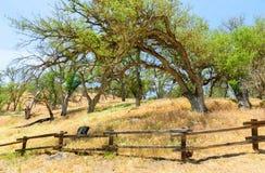 Monumento nacional de los pináculos Fotos de archivo libres de regalías