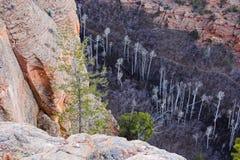 Monumento nacional de Navajo Foto de archivo libre de regalías