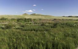 Monumento nazionale dei letti fossili dell'agata Immagini Stock Libere da Diritti