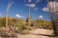 Monumento nazionale del cactus della canna d'organo, Arizona, U.S.A. fotografie stock