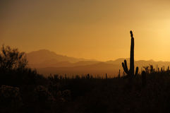 Monumento nazionale del cactus della canna d'organo, Arizona, U.S.A. immagine stock