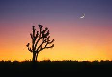 Monumento nazionale dell'albero di Joshua Fotografia Stock Libera da Diritti