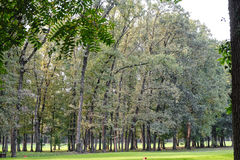 Monza Italy, the park in autumn Stock Photography