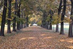 Monza Italy:  the park at fall Stock Photos