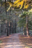 Monza Italy:  the park at fall Stock Photography