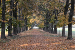 Monza Italy:  the park at fall Royalty Free Stock Image