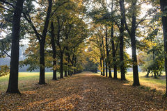 Monza Italy:  the park at fall Stock Images