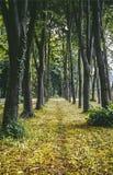 Monza Park royaltyfri fotografi