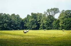 Monza Park Stock Image