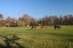 Monza park: horses at pasture Stock Photos