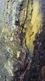MOO de madeira do whit da textura do detalhe da casca fotografia de stock