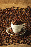 Mood shot of roasted coffee beans. Coffee beans, freshly roasted, piled up and filling a coffee cup and saucer all on a natural, woven hessian or jute background Royalty Free Stock Images