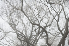 Moody background with Tree branches silhouette in fog Stock Photo